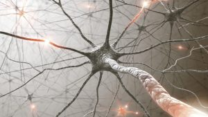 حرکت عضلات از طریق پالس های الکتریکی عصب ها صورت می گیرد