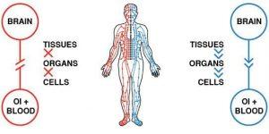 طب سوزنی میتواند گردش خون را در ناحیه گودی کمر و نخاع افزایش دهد